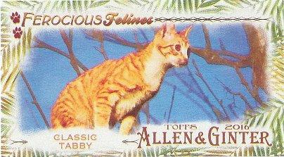 2016 Allen & Ginter Ferocious Felines #FF-9 Classic Tabby