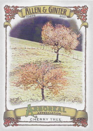 2021 Allen & Ginter Arboreal Appreciation #AA-8 Cherry Tree
