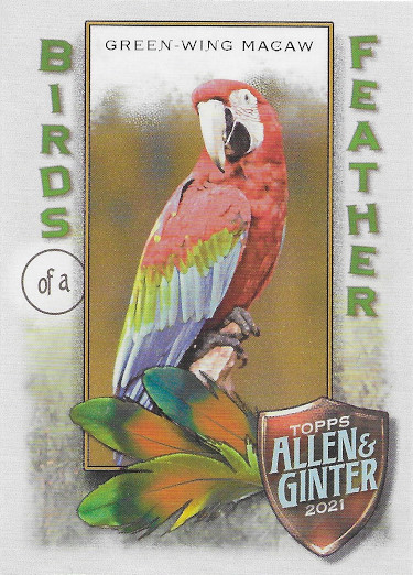 2021 Allen & Ginter Birds of a Feather #BOF-8 Green-Wing Macaw