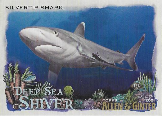 2021 Allen & Ginter Deep Sea Shiver #DSS-15 SILVERTIP Shark