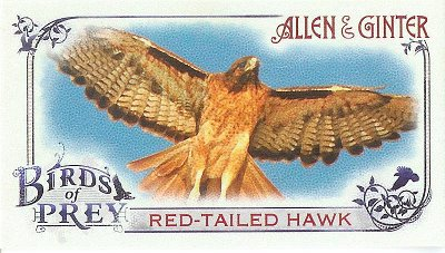 2015 Allen & Ginter Birds of Prey BP-1 Red-tailed Hawk